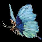 butterfly-took-wing-crop_flip